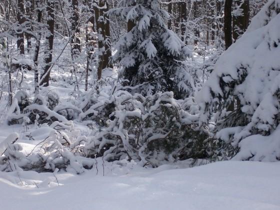 Einmal noch im meterhohem Schnee waten