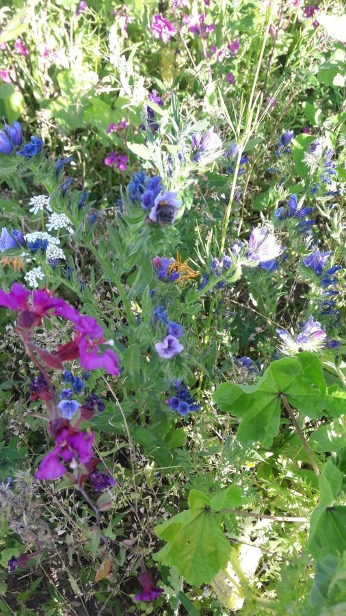 Blumenwiese1