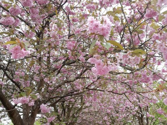 Blütenende