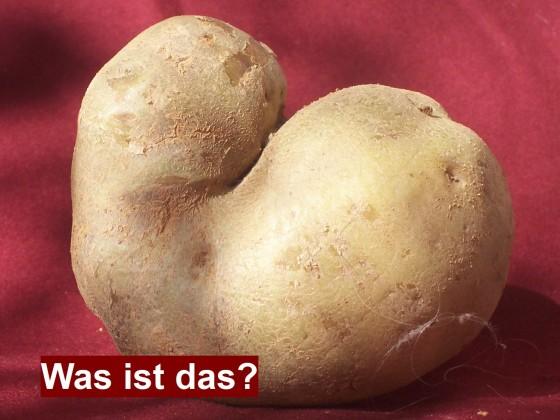 Kartoffelhund